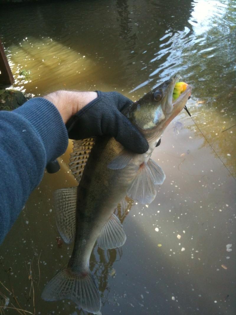 Streetfishing @ Metz 50cm_310