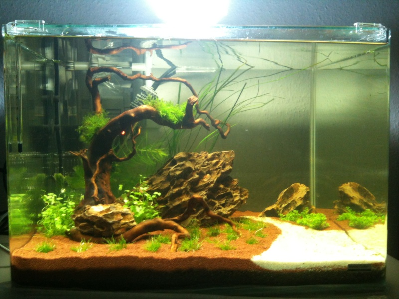 Mon Scaper's Tank 50L Aquascaping Img_0210