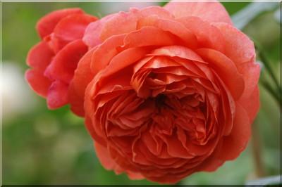 rosier summer song 4228_d10
