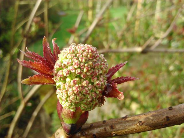 38 - Les bourgeons..... Photos reçues - Page 2 Dsc_0158