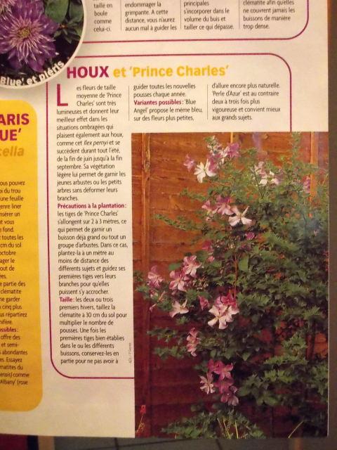 Osmanthus à feuillage panaché  - Page 2 Dscn7105
