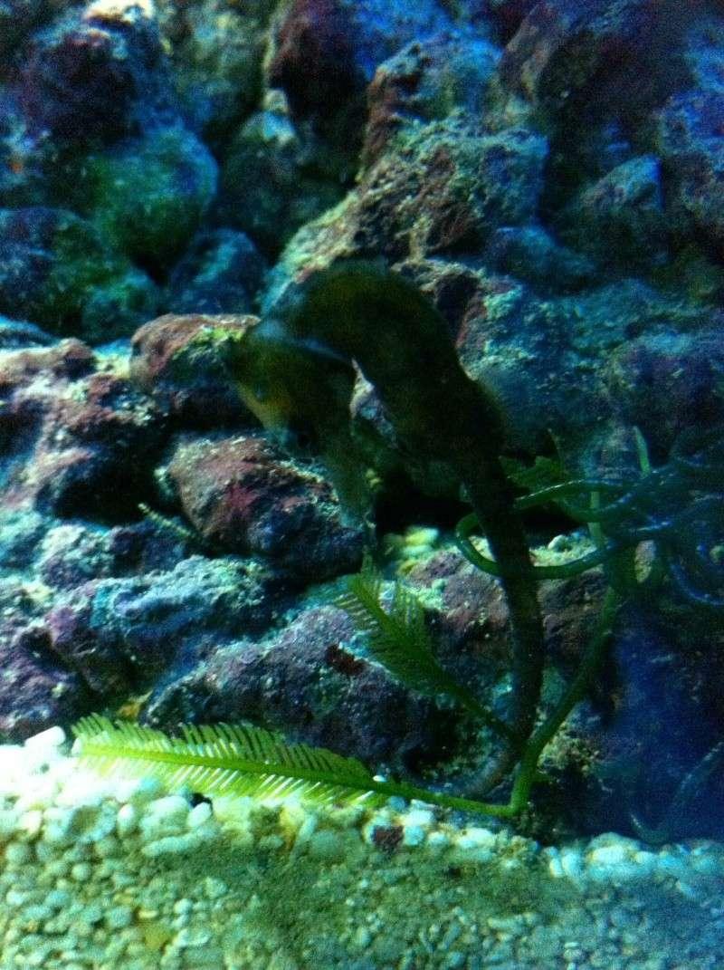 Mon Lido120 eau de mer Image15