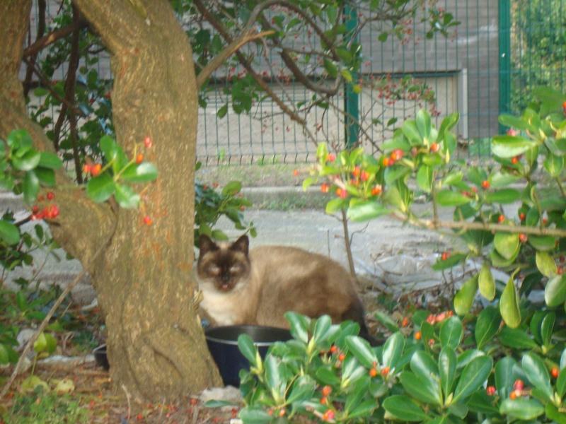 chats en grand danger sur un site de démollition : les pelleteuses sont là ! (78) - Page 3 03711