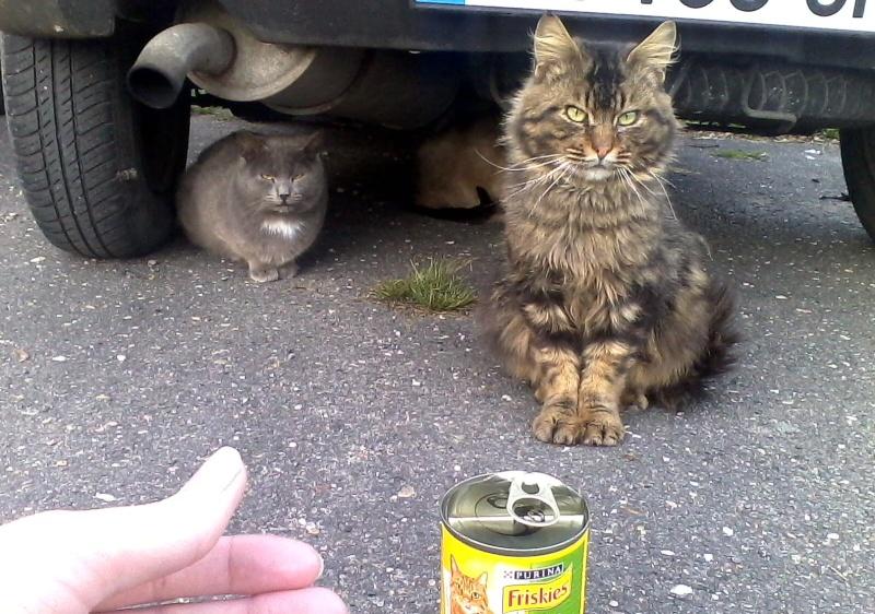 chats en grand danger sur un site de démollition : les pelleteuses sont là ! (78) - Page 3 Img10010