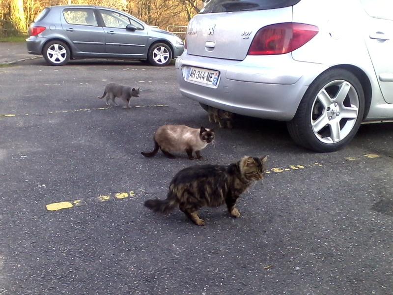 chats en grand danger sur un site de démollition : les pelleteuses sont là ! (78) - Page 3 Img10011