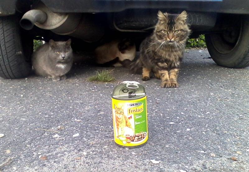 chats en grand danger sur un site de démollition : les pelleteuses sont là ! (78) - Page 3 Img10012
