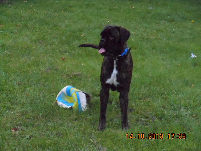 photos de chiens nés LOF et non confirmable 00914