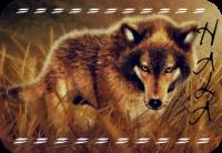 A Wolfs Tail Hala10