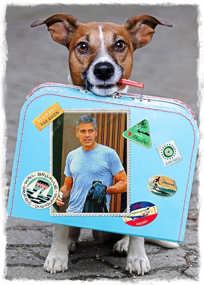 George Clooney George Clooney George Clooney! - Page 15 Img_0915