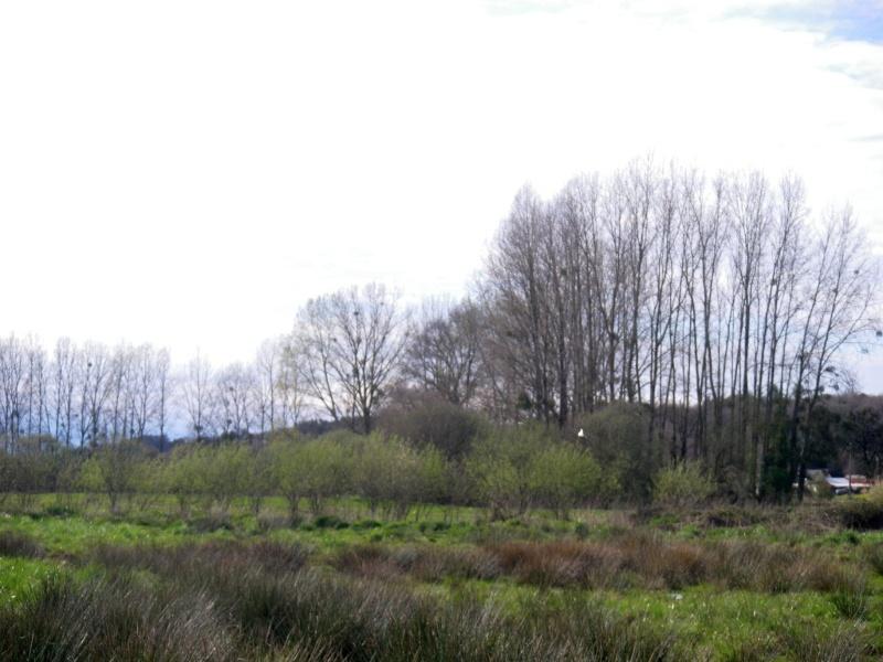 Bécassines du Morbihan Imgp3041