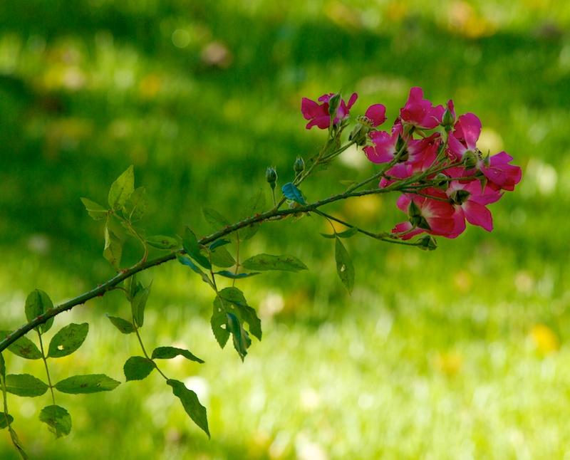 Rouge sur vert Fleur10