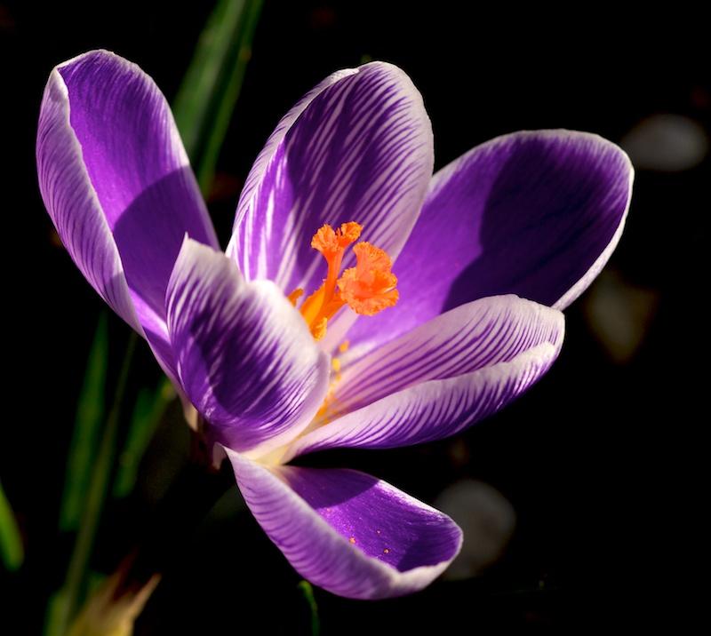 contre-jour Fleur_11