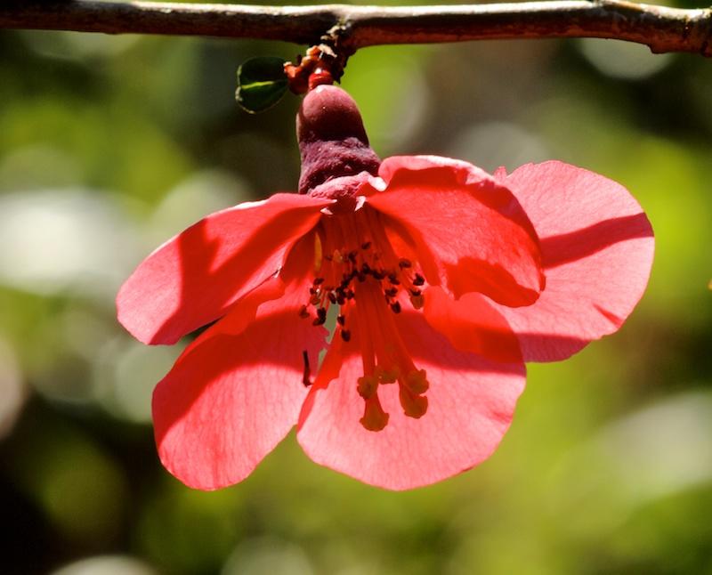 Des fleurs Rouge_10