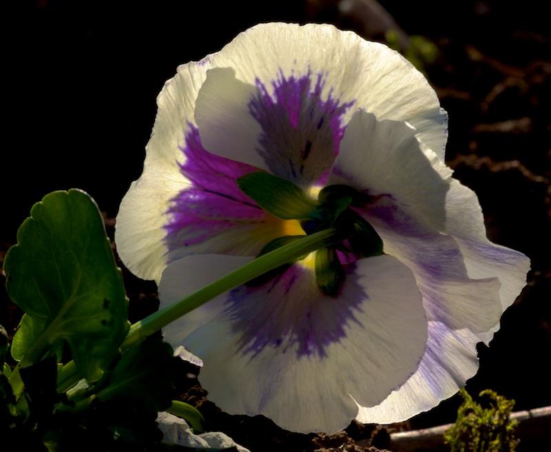 Des fleurs Truc10
