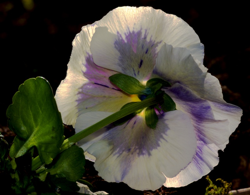 Des fleurs Truc_110