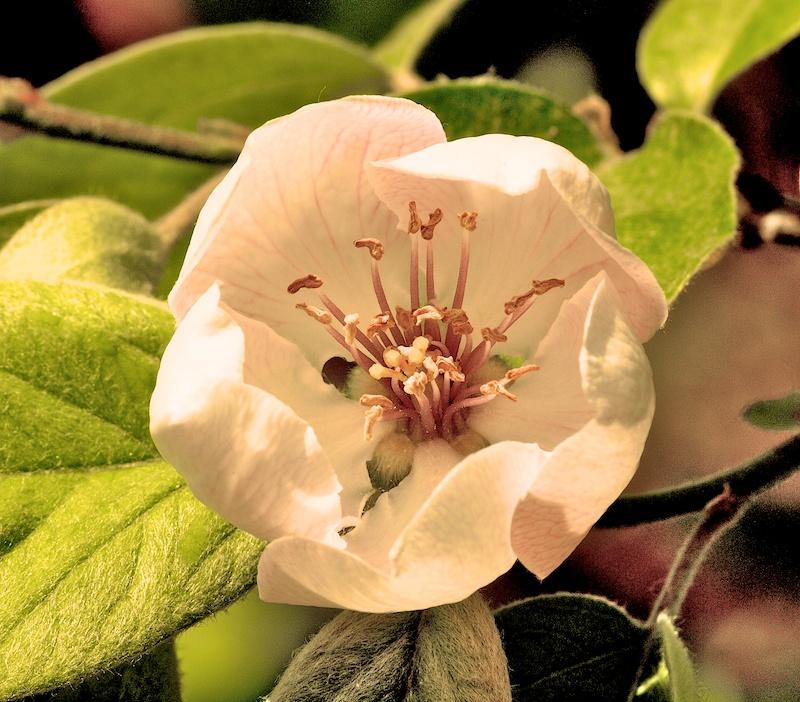 Des fleurs Vintag10