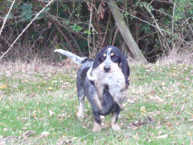 fotos bbg pour la commission d élevage P1320410