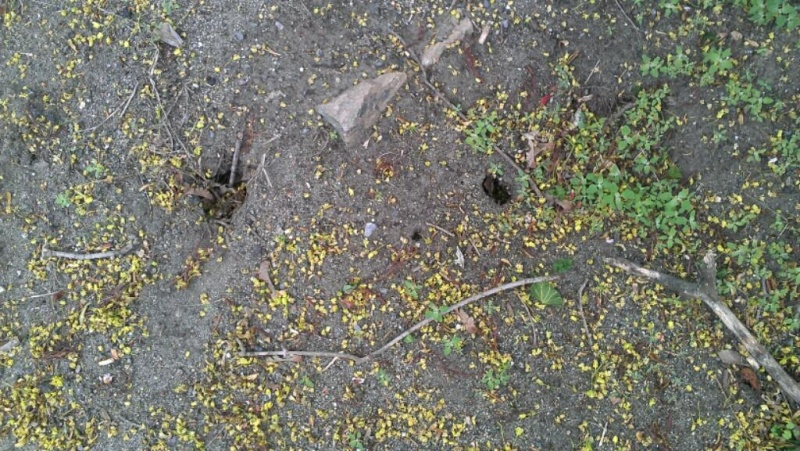 What animal makes these holes in my yard? Three_10