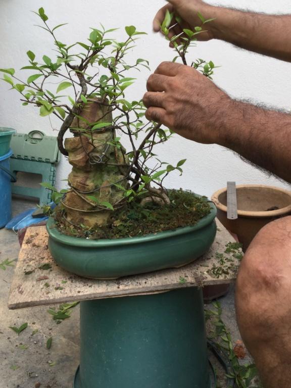 Root over rock Jasmine  0eca3810