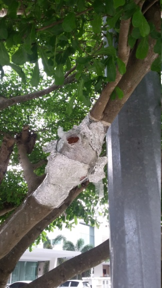 Airlayering an apple tree E34b3410