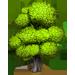 Chêne => Bois Ashtre11