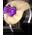 Lac des Cygnes => Plume de cygne Bereth10