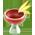 Cerisier / Cerisier Pastel Cherry12
