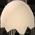 Habitat Petits Poussins / Poussin Football Eggshe11