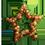 Pacanier => Noix de Pécan Nutsta10