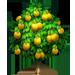 Vous cherchez un arbre ? Venez cliquer ici !!! Pawpaw18