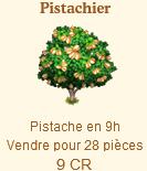 Pistachier Sans_843