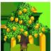 Vous cherchez un arbre ? Venez cliquer ici !!! Starfr19