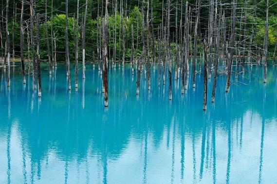L'étang bleu d'Hokkaido Blue-p10