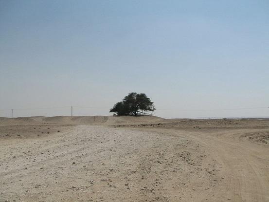 Shajarat-al-Hayat , l'arbre de vie Tree-o10