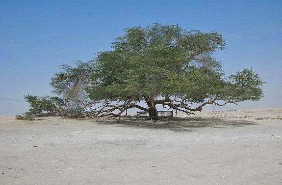 Shajarat-al-Hayat , l'arbre de vie Tree-o11
