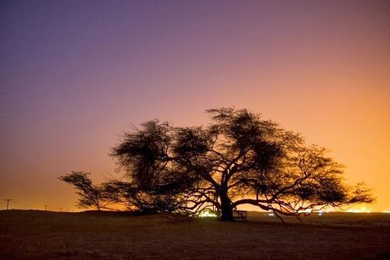 Shajarat-al-Hayat , l'arbre de vie Tree-o12