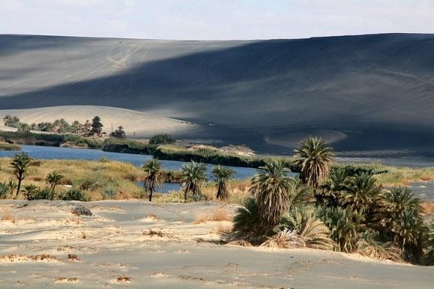 L'oasis des moustiques Waw-an10