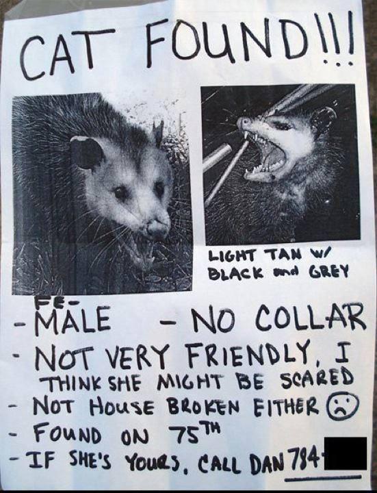 """Found """"cat"""" 13822910"""