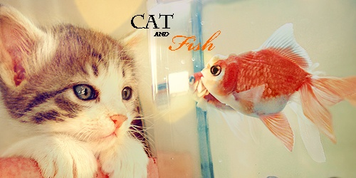Cotw Animaux [Signa] Cat_an10