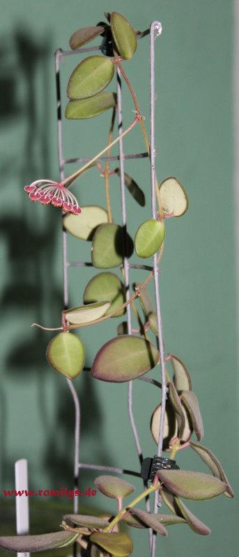 Blüten 2013 - Seite 10 Plant10