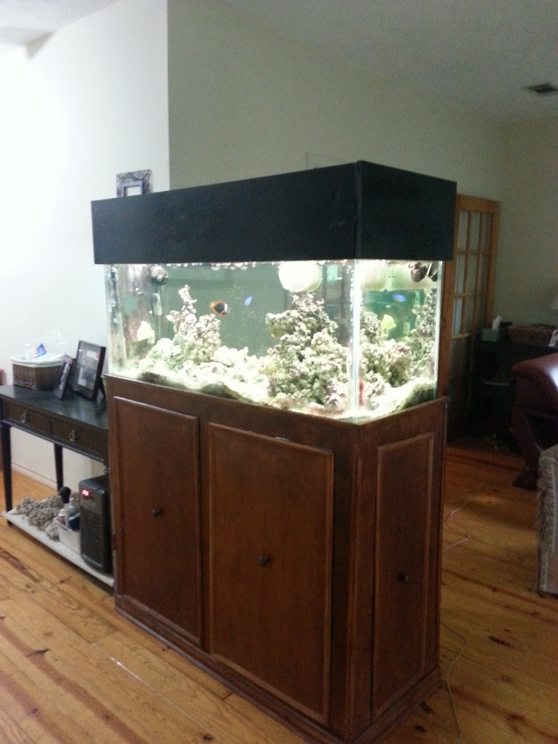 Downsizing/Moving, fish need to go! 20140511
