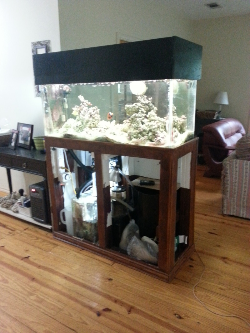 Downsizing/Moving, fish need to go! 20140515