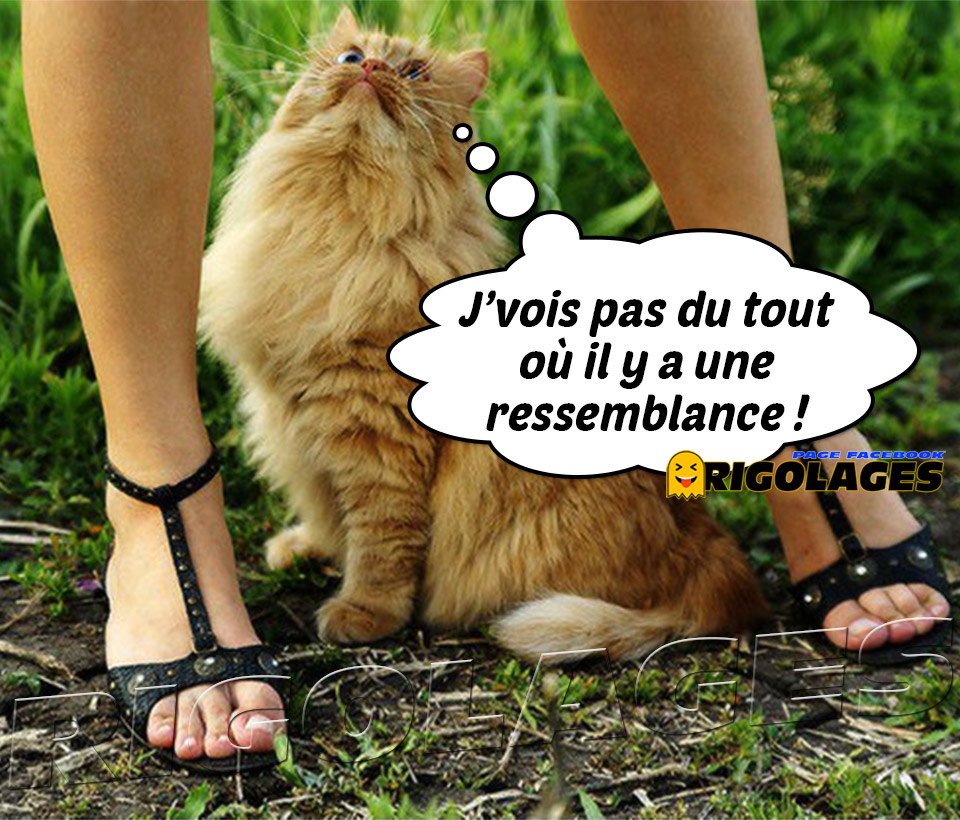 humour - Page 21 13101710