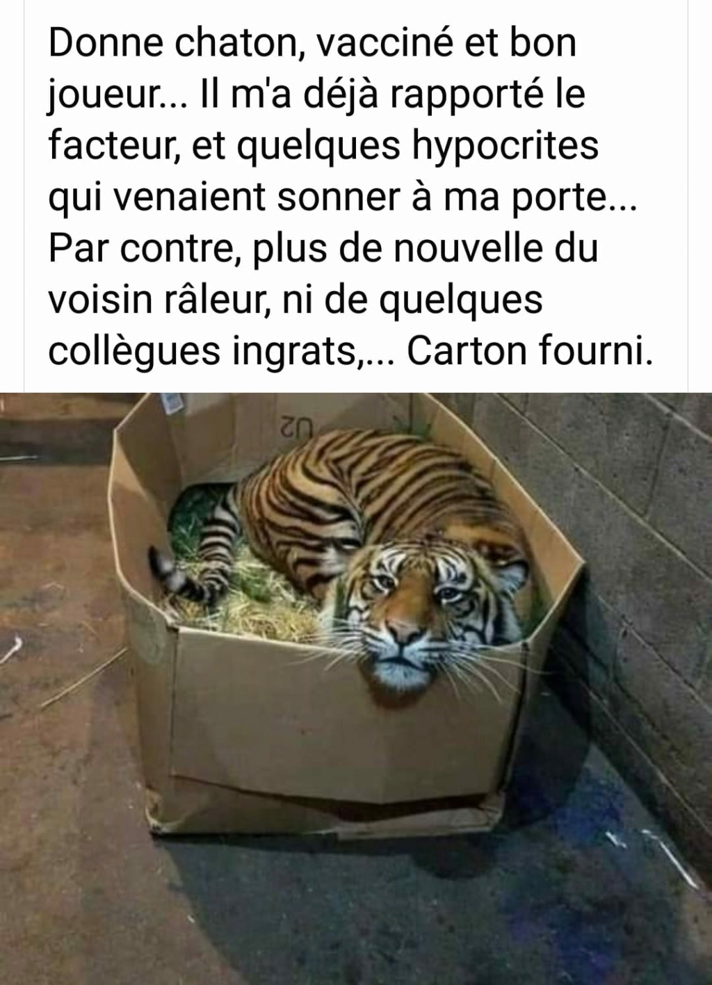 humour - Page 23 13574510