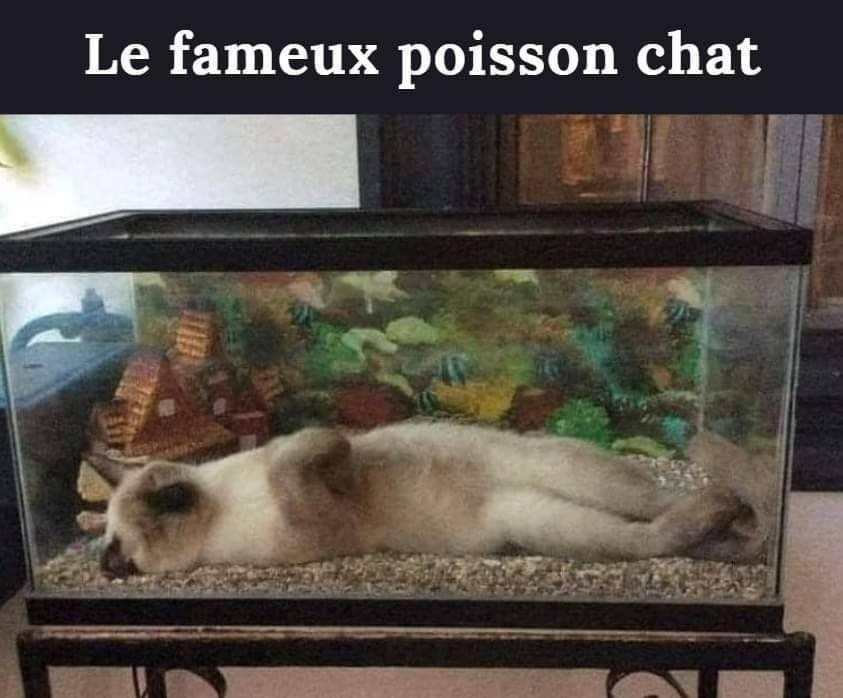 humour - Page 24 13965210