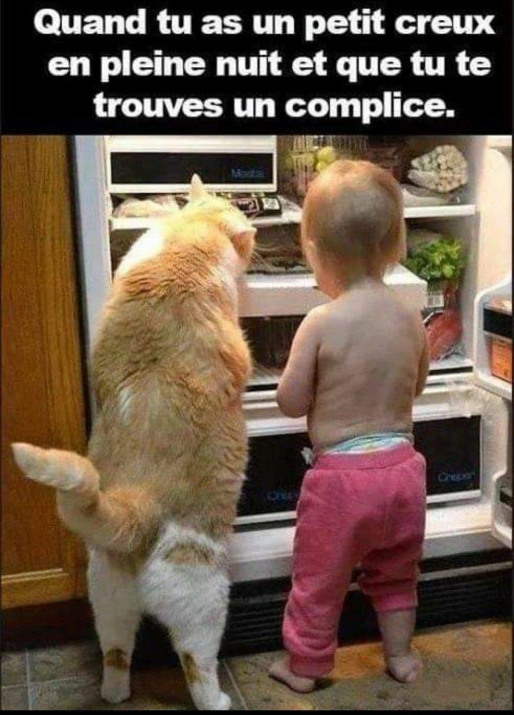 humour - Page 24 14080110