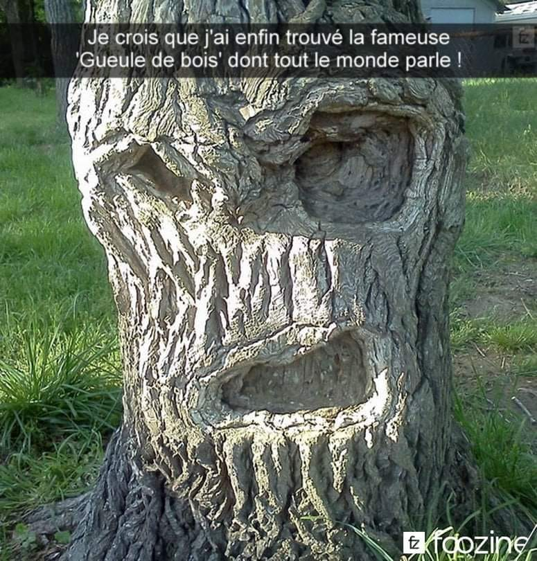 humour - Page 38 14325710