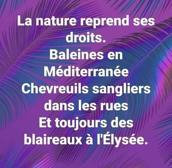 humour - Page 38 14412910
