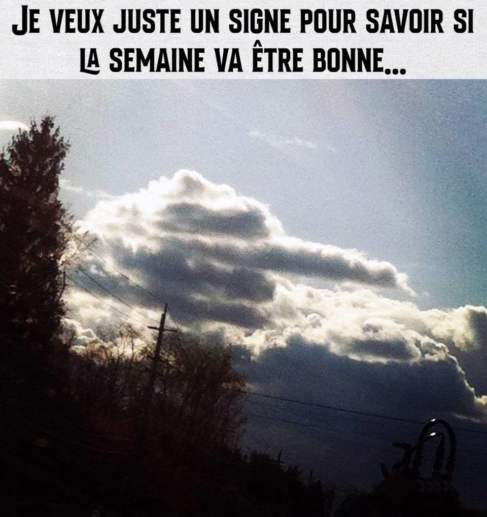 humour - Page 37 17619010