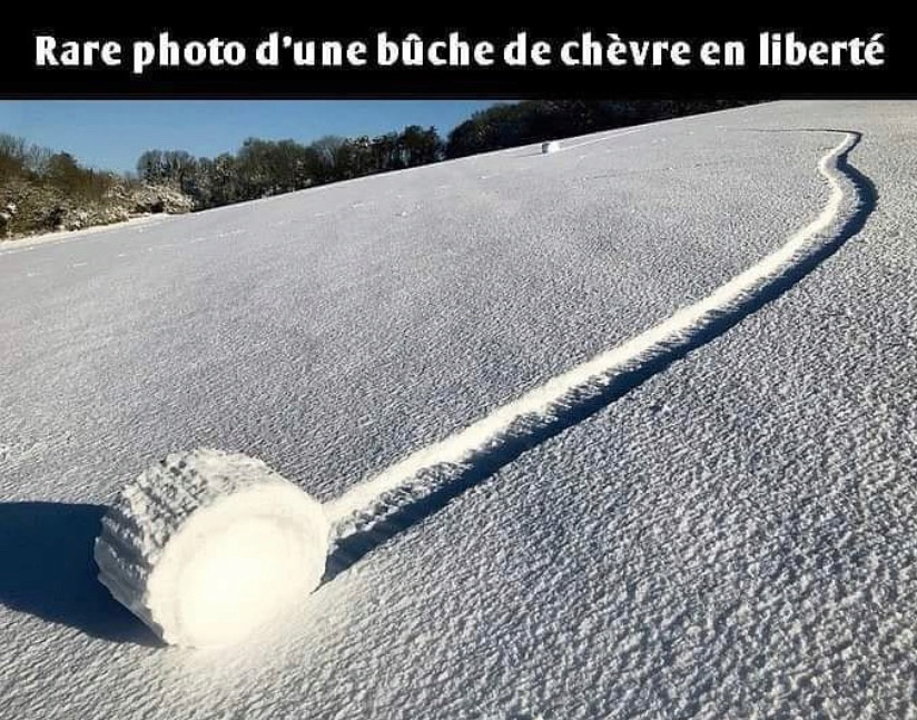 humour - Page 39 18201710